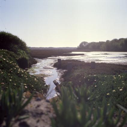 south of the Bay :: on the way through monterey :: 2013 :: ektachrome