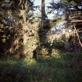 outside big sur :: 2013 :: ektachrome