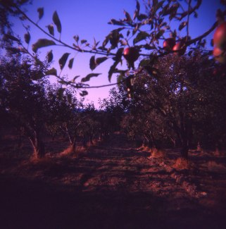 sun is low :: sonoma, ca :: ektachrome :: 2010