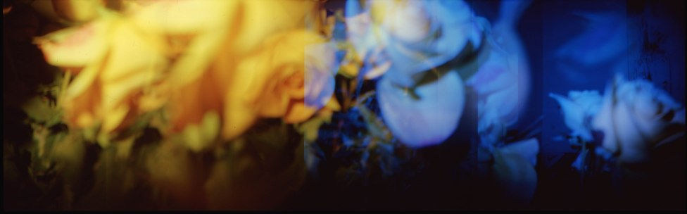 yellow roses to blues :: ektachrome :: holga :: 2010