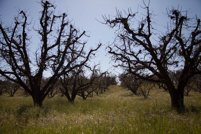 mendocino redwoods-004