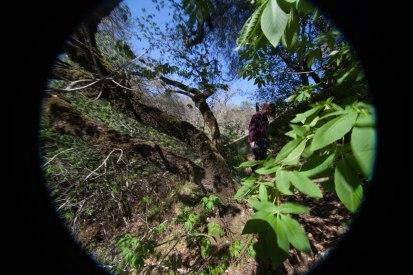 mendocino redwoods-048