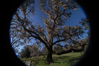 mendocino redwoods-054