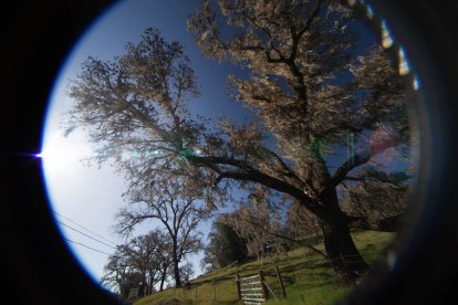 mendocino redwoods-056