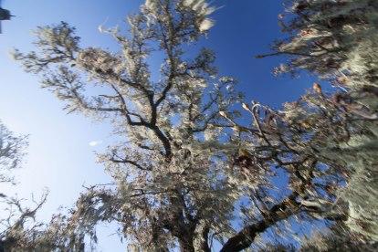 mendocino redwoods-065