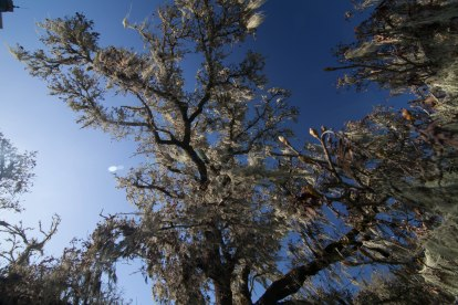mendocino redwoods-066
