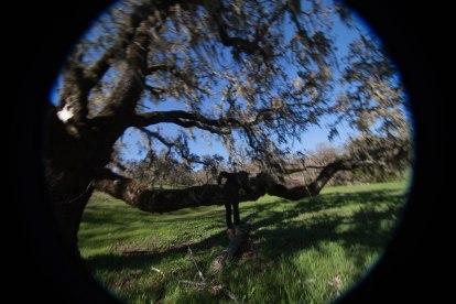 mendocino redwoods-078