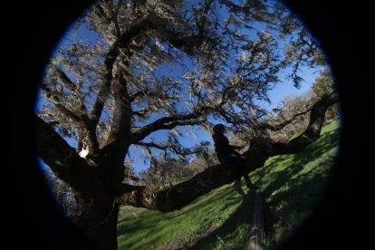 mendocino redwoods-082