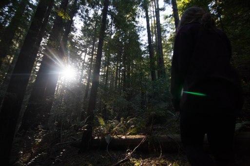 mendocino redwoods-124