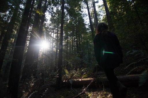 mendocino redwoods-125