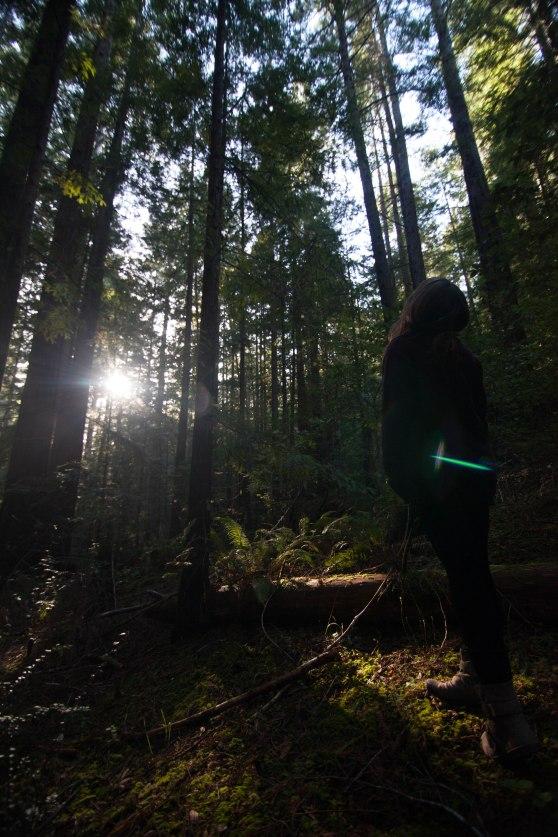 mendocino redwoods-126