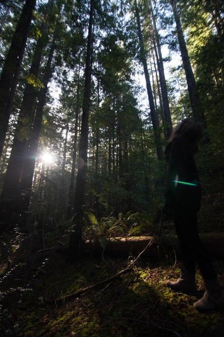 mendocino redwoods-127