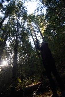 mendocino redwoods-128