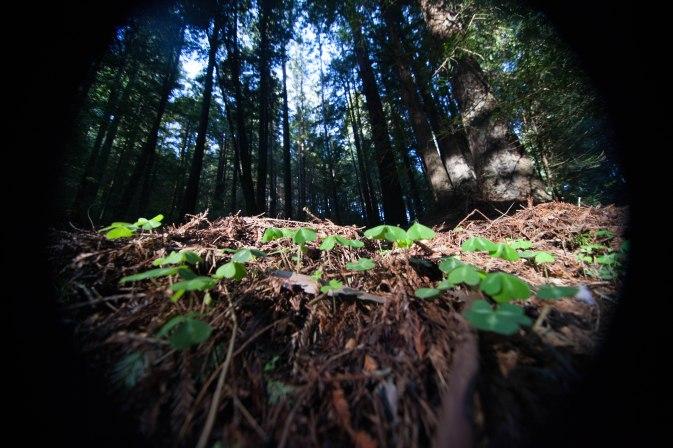 mendocino redwoods-139