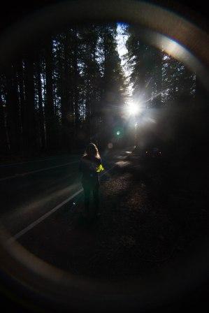 mendocino redwoods-161