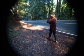 mendocino redwoods-162