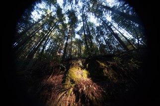 mendocino redwoods-168