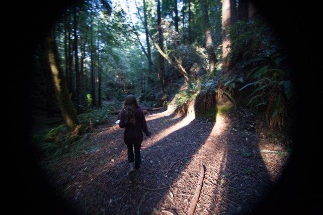 mendocino redwoods-169
