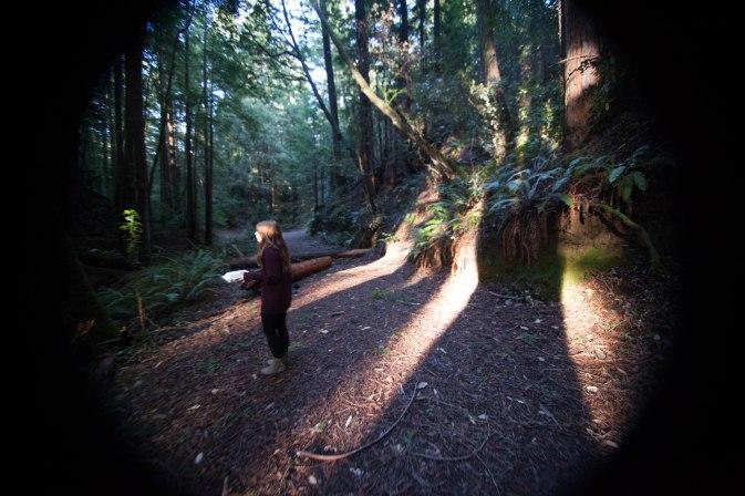 mendocino redwoods-170