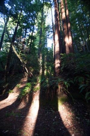 mendocino redwoods-173