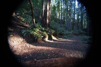 mendocino redwoods-183