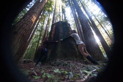 mendocino redwoods-218