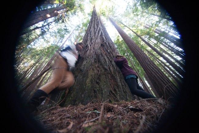 mendocino redwoods-220
