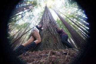 mendocino redwoods-221