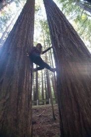 mendocino redwoods-224