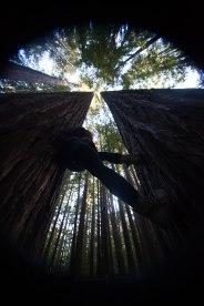 mendocino redwoods-228