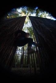 mendocino redwoods-229