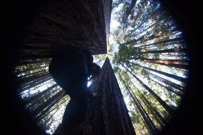 mendocino redwoods-231