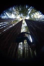 mendocino redwoods-232