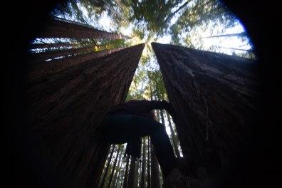 mendocino redwoods-234