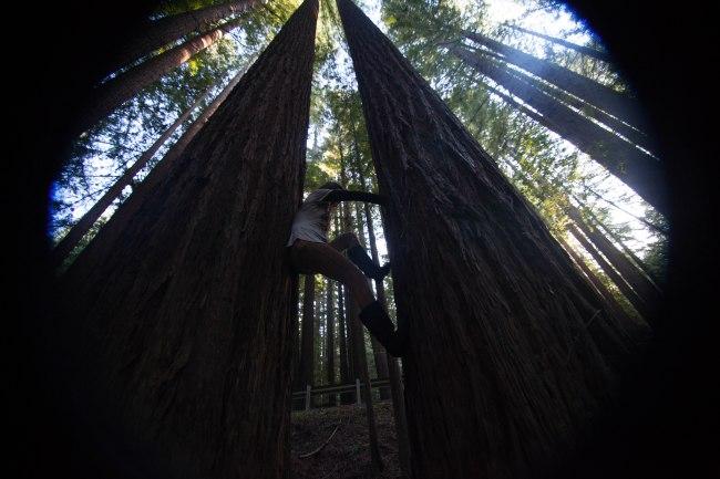 mendocino redwoods-236