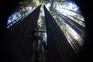 mendocino redwoods-241