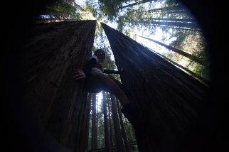 mendocino redwoods-243