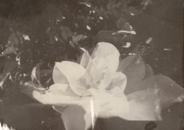 opening | salt print 2012 | image captured 2011