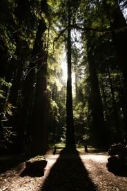 cali*redwoods&stars*1