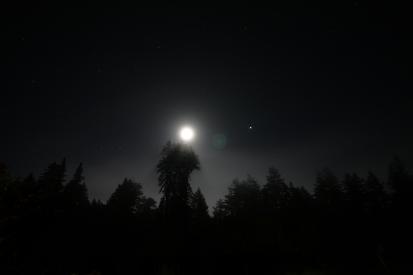 cali*redwoods&stars*10