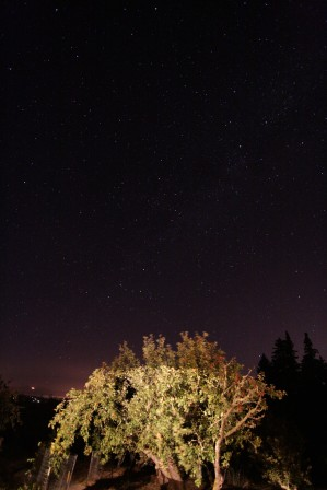 cali*redwoods&stars*14