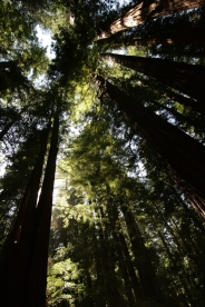 cali*redwoods&stars*2