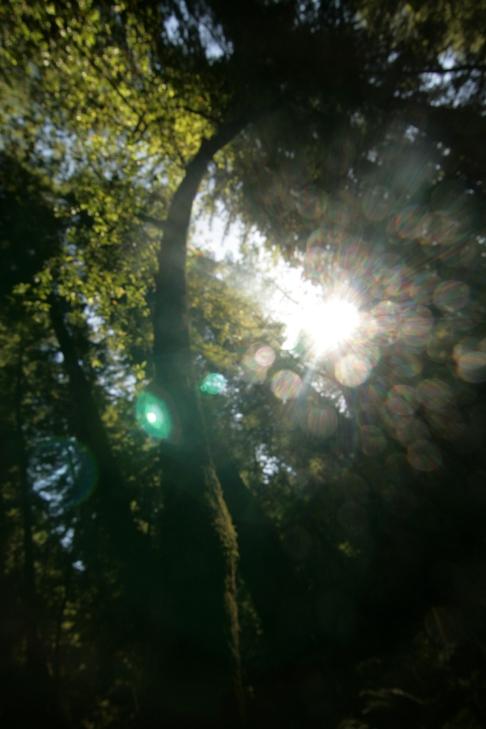 cali*redwoods&stars*4