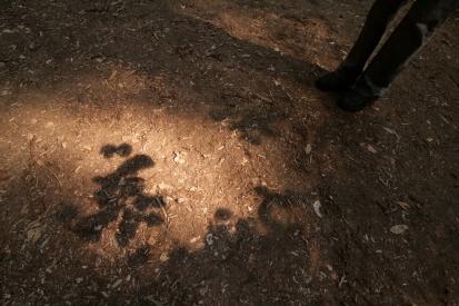 cali*redwoods&stars*7