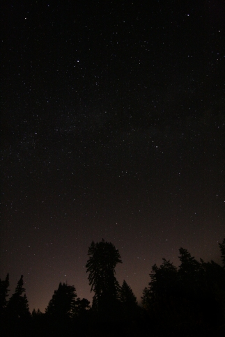 cali*redwoods&stars*8