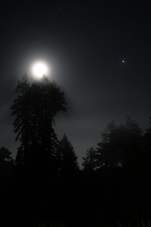 cali*redwoods&stars*9