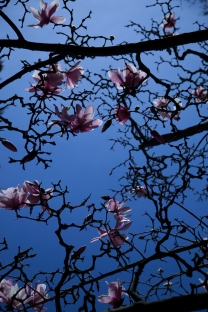 sf botanical gardens | feb 13 2015