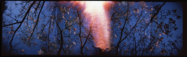 sf botanical gardens | holga panorama | ektrachrome | feb 13 2015