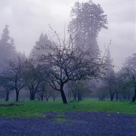 ektachrome | sebastopol, ca | december 2014